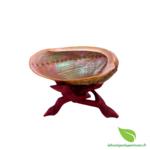 abalone diversicolor