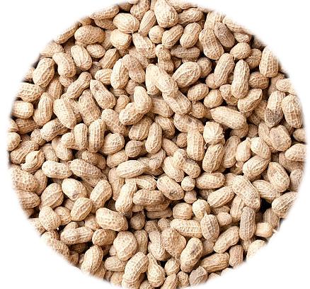 Cacahuètes Coque Grillées
