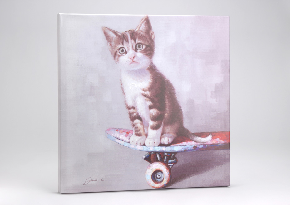 toile chat sur son skate