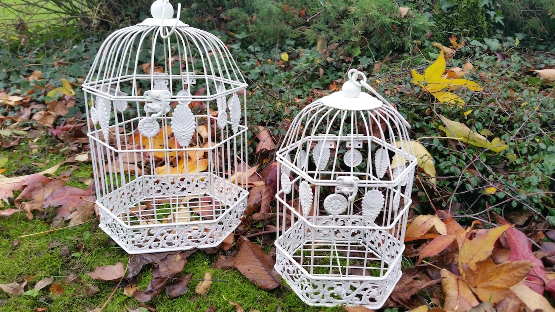 cage oiseau 1