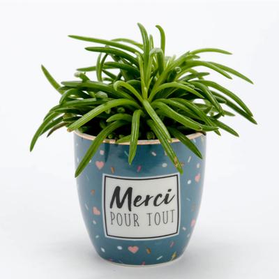 Mini Pot - Merci pour tout
