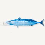 manche-à-air-poisson-maquereau-bleu