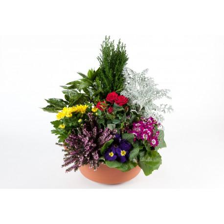 coupe-de-plantes