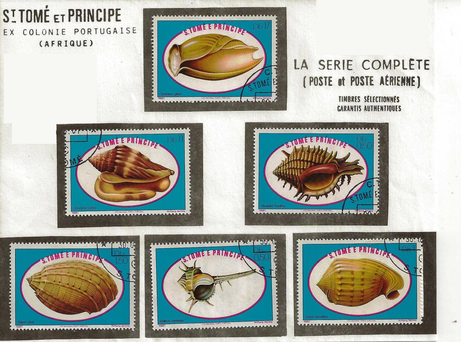 coquillages sao tome