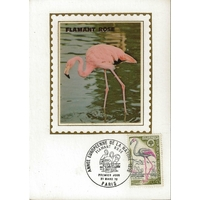 CARTE MAXIMUM 1970 / ANNEE EUROPEENNE DE LA NATURE LE FLAMANT ROSE / PARIS