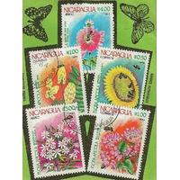 5  FLEURS NICARAGUA