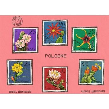 fleurs pologne