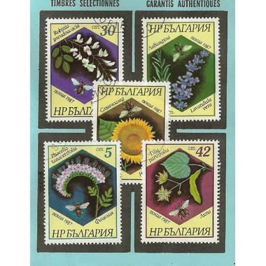 fleurs 5 bulgarie