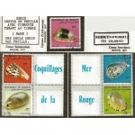 djibouti coquillages