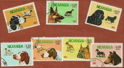 NICARAGUA CHIENS