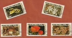 Comores champignons
