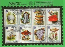 paraguay champignons