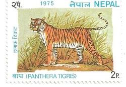 Nepal tigre