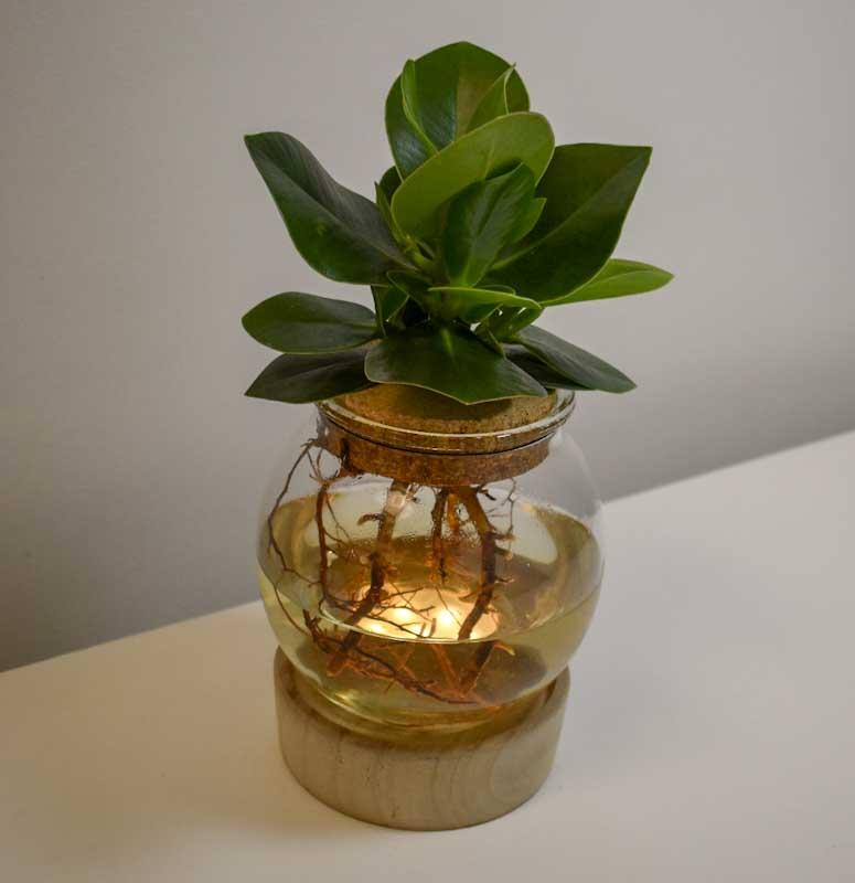 lampe plante grasse 2