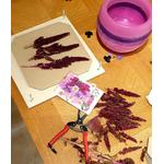 Les Artisans Ciriers Bruxellois Bougie Photophore Globe Coloré Fushia