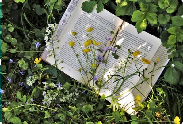 fleurs belle book