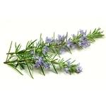 Savon ``Dame Nature Menthe et Romarin Lulu Shop 1