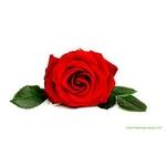 Savon ``Dame Nature Rose et coquelicot Lulu Shop 1