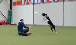 frisbee disc dog chien cours coach
