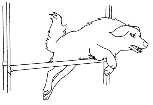 cours agility chien saint amand