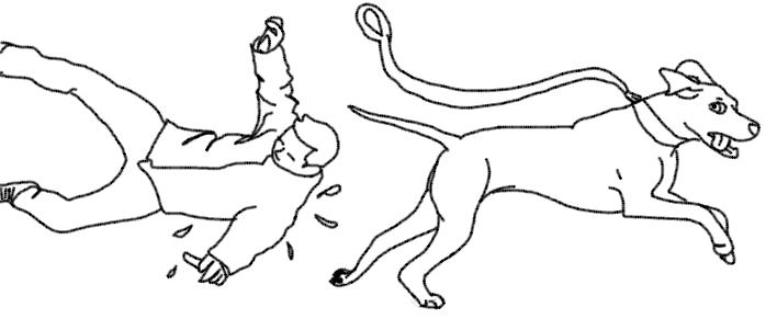dressage education canine positive valenciennes saint amand orchies