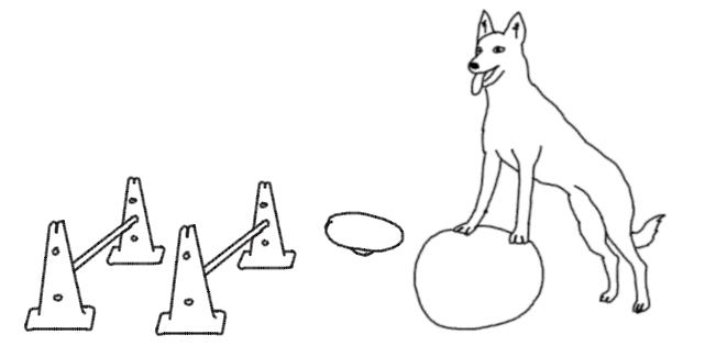 proprioception gym chien canin