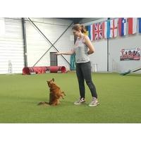 Samedi 15 décembre 2018 : Initiation Dog Dancing avec Hélène Cudel