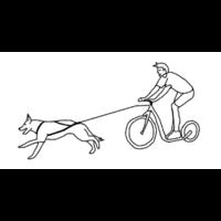 Cours privé de Cani-Trottinette