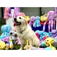 Pack d'accessoires pour chiens et chats
