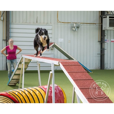 stage agility debutant nord