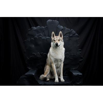 Heïko game of thrones seance photo loup