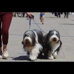 Balade éducative « chiots et chiens calmes »