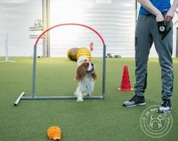 Hooper agility