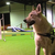 cours agility valenciennes lille nord