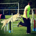 cours agility indoor nord