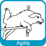 Agility 59 chien