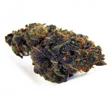 cbd-blackberry-kush
