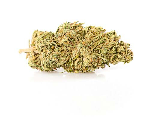 melon-kush-cbd-fleur-plante-de-cannabis-1