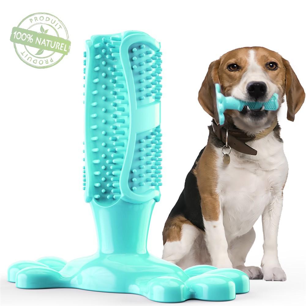 Jouet brosse à dents à mâcher