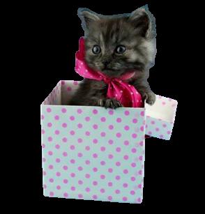 Boutique-en-ligne-pour-chats
