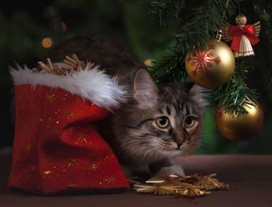 Boutique-en-ligne-noel-chats