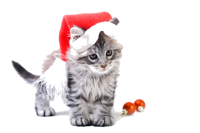 Boutique-de-noel-pour-chats