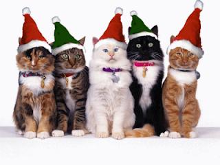Vetements-de-noel-pour-chats