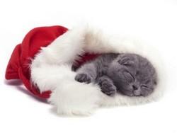 Lit-noel-pour-chats
