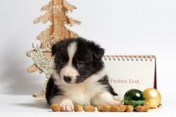 Boutique-noel-pour-chiens