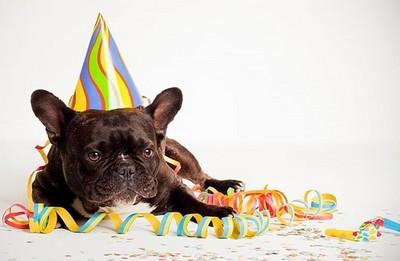 Boutique-anniversaire-pour-chiens