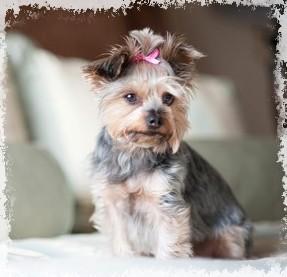 Boutique-mariage-pour-chiens