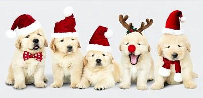 Vetements-noel-pour-chiens