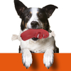 Jouets-pour-chiens-chien-a-macher-hygiene-dentaire-dentition-os-etoile-saucisse-baton-batonnet-mordre-mordiller-brosse-dent-dents