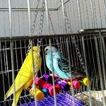 Jouets-balançoire-oiseaux-Accessoires-cage-oiseaux-Jouet-pour-oiseau